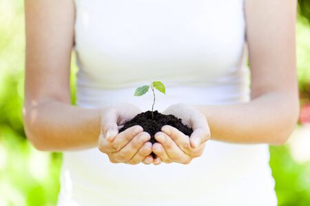 litle: litle plant in hands new life concept