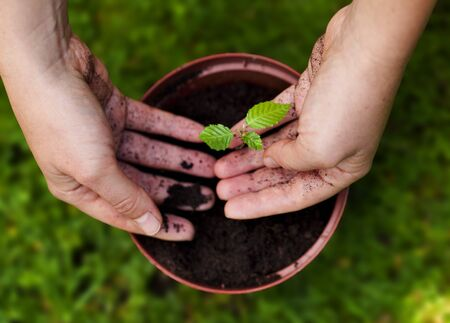planting a tree: Planting a tree in a flower pot