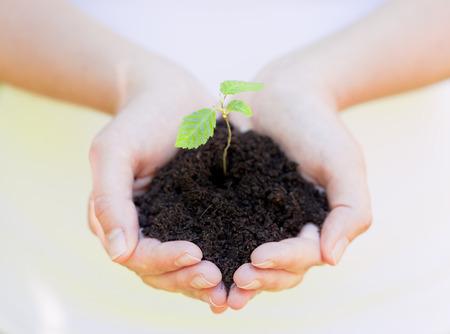 litle: litle plant in soil