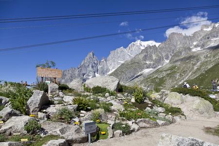 BOTANIC GARDEN Saussurea, hiking in the Mona Blanc area