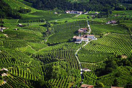 Grape wine land countryside landscape background of hills with mountain backdrop in Italy