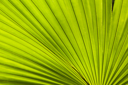 palm tree leaf background Stock Photo