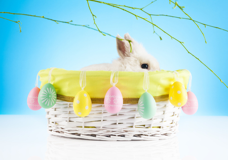 Cute Easter Bunny sitting in a wicker basket with Easter eggs decorated with green twigs in the background