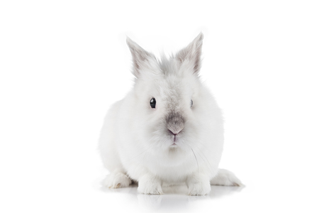 Cute Easter Bunny on a white background