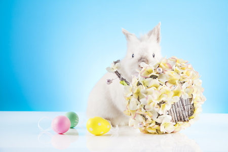 Cute Easter Bunny playing with a wicker basket