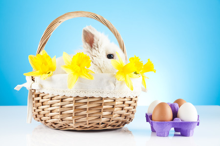 Cute Easter Bunny sitting in a wicker basket decorated with daffodil