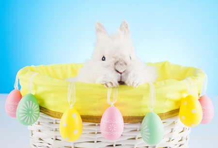 Cute Easter Bunny sitting in a wicker basket decorated with Easter eggs Stock Photo
