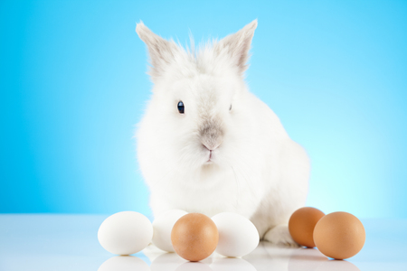 renew.: White Easter Bunny sitting in with colored eggs around Stock Photo