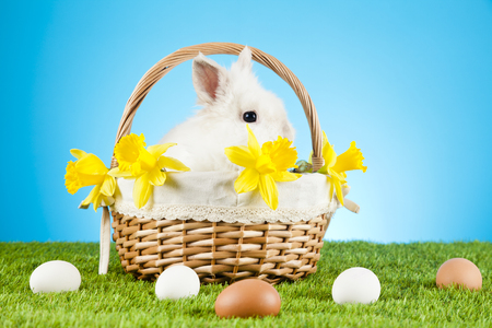 renew.: Cute Easter Bunny sitting in a wicker basket decorated with Easter eggs Stock Photo