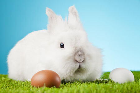 White Easter Bunny sitting in green grass with colored eggs around