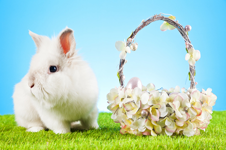 renew.: White Easter Bunny sitting in green grass with colored eggs around