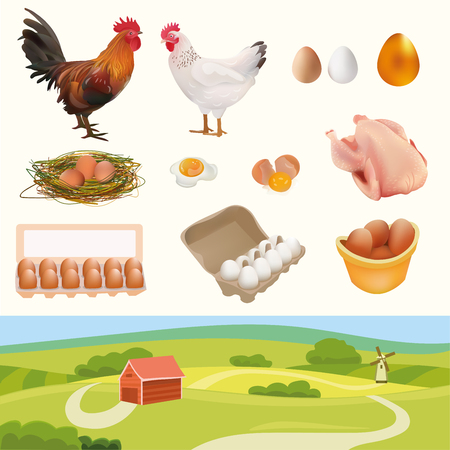 chicken and egg: Farm Set with Rooster, Hen, Chicken, Nest, White, Orange, Golden Eggs, Broken Egg, Omelette, and Landscape. Isolated On White Background Illustration