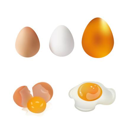 broken eggs: White, Brown, Gold Egg, Broken Egg and Fried Eggs Vector Illustration. Isolated On White Background Icon