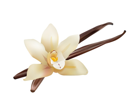 Flor de vainilla realista y palillos. Vector aislado de la ilustración del icono Foto de archivo - 54341539