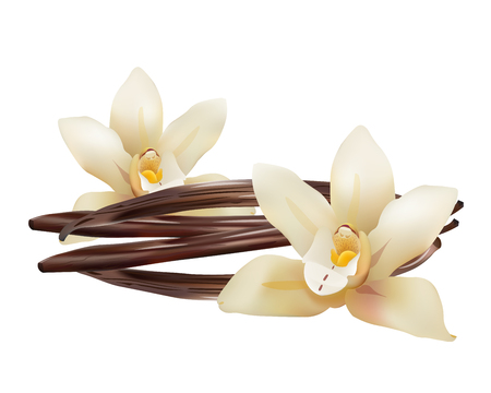 Realistic Vanilla Flowers and Sticks. Vector Isolated Illustration Icon