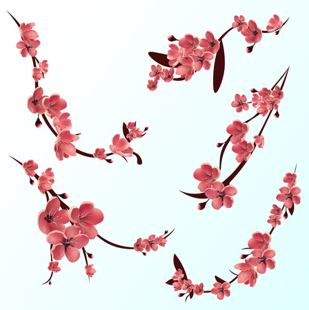 Branches of rose blossoming sakura . Japanese cherry tree. Vector Isolated icon Set