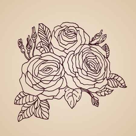 botanical garden: Hand Drawn Roses . Vector Floral Illustration for colored book, t-shirt, poster, greeting card.