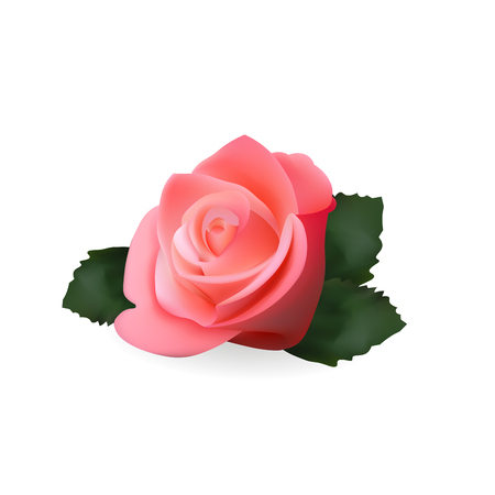 Pink Rose Realistic Icon. Vector Illustration. Isolated On White Background,