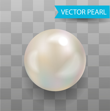 Realistic Vector Pearl . Transparent Background.