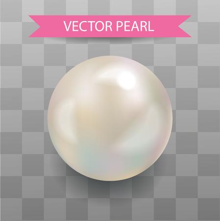 パールのベクター。現実的な真珠。透明な背景。