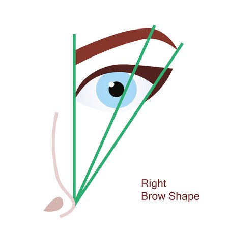 brow: Right brow shape