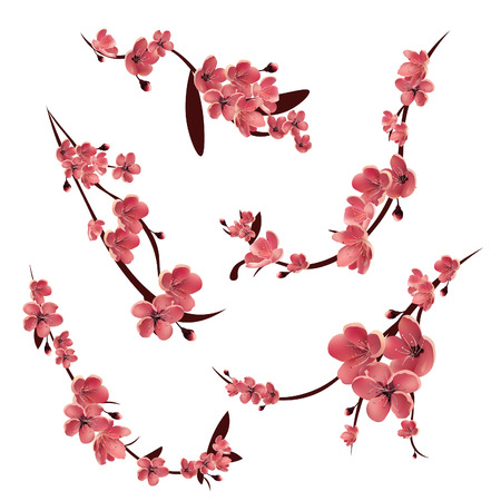 Branches of pink blossoming sakura . Japanese cherry tree. Vector Isolated icon Set Иллюстрация