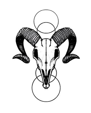 Handdrawn Line Ram Scull Illustration
