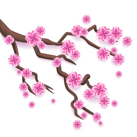 Branch of pink sakura. Japanese cherry tree blossom. Vector  Illustration