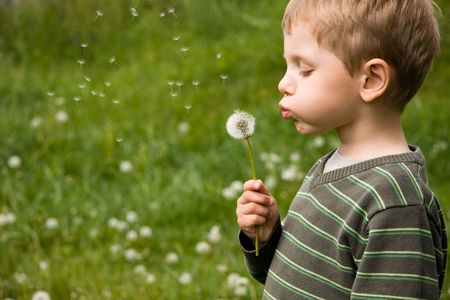 4 years old boy blowing dandelion in summer day