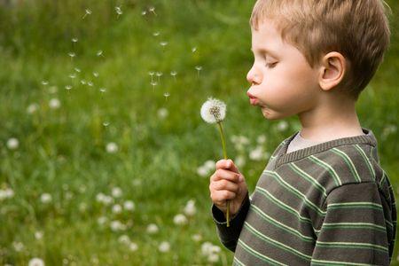 4 years old boy blowing dandelion in summer day