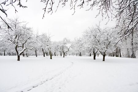 Trees in park covered by snow in winter day Stock Photo - 8288495