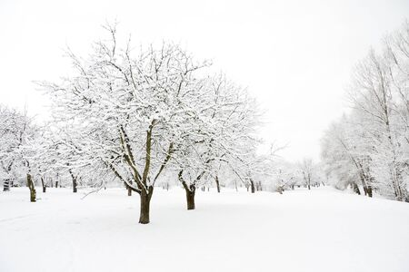 Trees in park covered by snow in winter day Stock Photo - 8412533