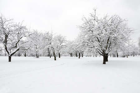 Trees in park covered by snow in winter day Stock Photo - 8595306