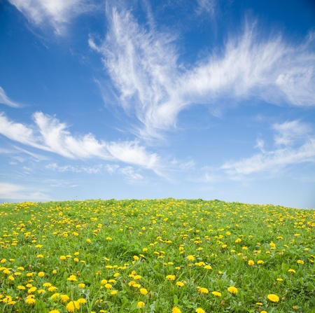 Green grass with yellow dandelion flowers against blue sky Stock Photo - 9158400