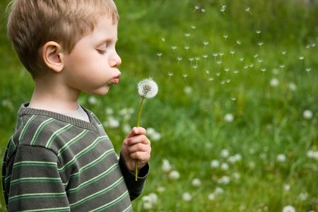 blowing dandelion: Ragazzo tarassaco 4 anni che soffia in giornata estiva Archivio Fotografico