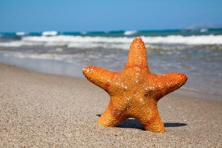 seashores: Starfish on sandy beach in summer day. Stock Photo