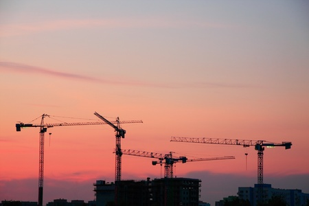 Silhouette of cranes in sunset photo