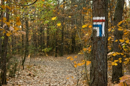 Touristic trail signs painted on a tree bark Stock Photo - 11131069