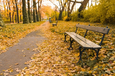 vanish: Bench on footpath in park full of yellow leaves