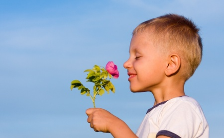 3 years old boy smelling rose flower in spring day  photo