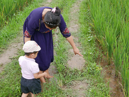 Asian mother explaining about rice field to her little daughter standing in a small irrigation stream - getting outside and engage with nature provides positive impact on baby's health and development