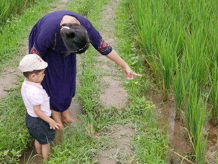 Asian baby, standing in a small irrigation stream, enjoys learning from her mother about rice field - getting outside and engage with nature provides positive impact on baby's health and development Stock Photo