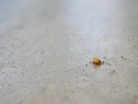 Ants working as a team carrying bread crumbs on a concrete floor Zdjęcie Seryjne