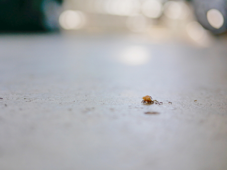 Ameisen, die als Team arbeiten und Semmelbrösel auf einem Betonboden tragen Standard-Bild
