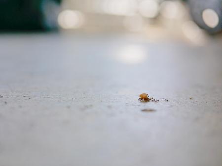 Formiche che lavorano in squadra trasportando briciole di pane su un pavimento di cemento Archivio Fotografico