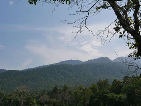 Green hill, blue sky, and white clouds with part of a big tree as a front background - relaxing landscape