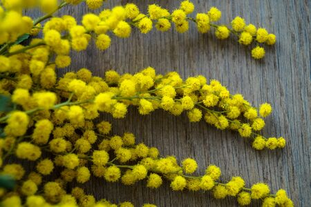 specificity: branch of flowers of Mimosa wooden background Stock Photo