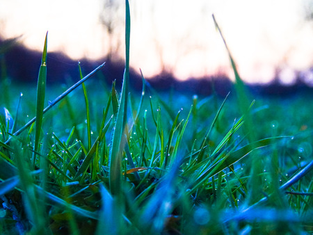 drops of dew on young green grass