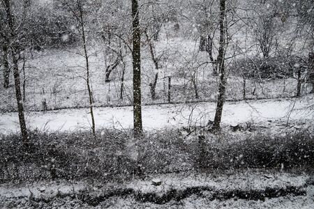 snowfall in the garden
