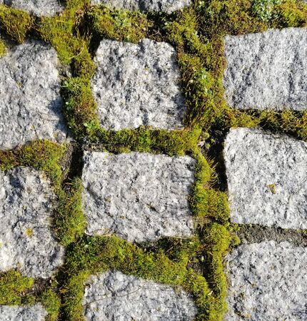 pavers and moss background beautiful streets of the city